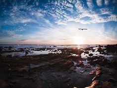 Alle Größen   Gull   Flickr - Fotosharing!