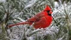 Top 10 más bellas aves en el mundo - Todo el TOP10