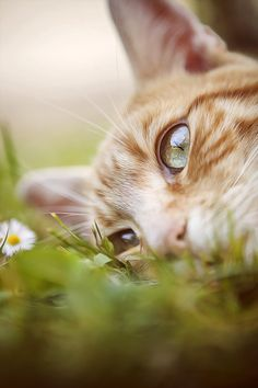 Photograph Me and daisy on the meadow by Kathika on 500px