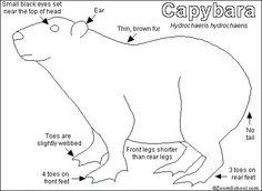 coloring pages capybara as pets - photo#16