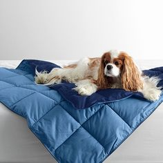 LaCrosse Dog Comforter