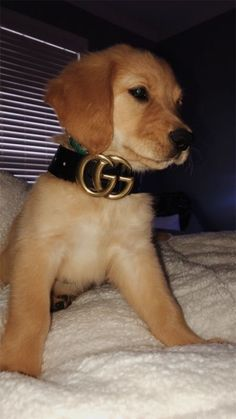 Champion Dogs: German Shepherd: Golden Retriever: Labrador Retriever: Beagle: Siberian Husky: Pit Bull Terrier: Chihuahuas: Pomeranian: Dog Tips and Ideas: Cute Dogs And Puppies, Baby Dogs, I Love Dogs, Doggies, Puppies Puppies, Cute Funny Animals, Cute Baby Animals, Animals And Pets, Cute Creatures