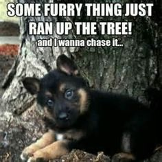 german shepherd funny pictures - Yahoo Search Results