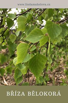 Plant Leaves, Herbs, Health, Garden, Plants, Syrup, Garten, Health Care, Lawn And Garden
