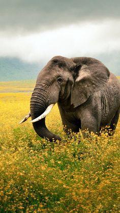 640x1136 Wallpaper elephant, grass, field, walk, sky, beautiful scenery