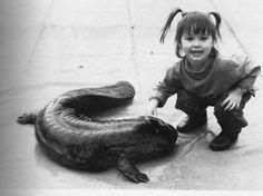 giant salamander
