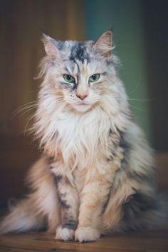 Кошачья жизнь #cat
