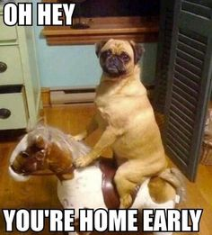 You're Home Early!  At Orchard Lake Pet Resort we strive to provide the best overnight care and grooming services for our canine clients!  Call (248) 372-7000 or visit our website www.orchardlakepetresort.com for more information about the services we provide!