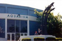 'Aquarium of Niagara' Falls NY   ...photo by Geraldine Clark