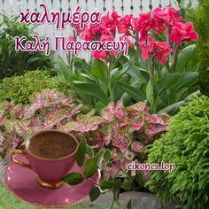 Plants, Google, Flora, Plant