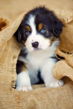 Puppies That Will Give You Feels Top 10 Healthiest Dog Breeds // In need of a detox? off using our discount code at.auTop 10 Healthiest Dog Breeds // In need of a detox? off using our discount code at. Cute Baby Animals, Animals And Pets, Funny Animals, Funny Dogs, Wild Animals, Cute Baby Dogs, Baby Cats, Cute Dogs And Puppies, I Love Dogs