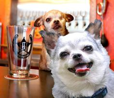 """This is my best buddy, Teddy. I don't see him very often, but when I do he always steals the show! Here we are at City Star Brewing which is owned by my sister and brother-in-law. They are HUGE supporters of National Mill Dog Rescue. The next time you're in Berthoud, Colorado stop in and try """"Harley's Honey Wheat"""" - yep, my very own brew!  Visit City Star's facebook page here: https://www.facebook.com/CityStarBrewing"""