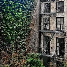 Juxtaposed in a concrete jungle.