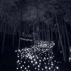Bamboo Lantern Festival (by Junigo)