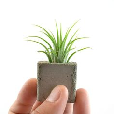 Concrete Mini Cube Magnetic Planter- if magnet is really strong, so not the weak, thin ones Concrete Cement, Concrete Design, Concrete Planters, Planter Pots, Concrete Crafts, Concrete Projects, Horticulture, Papercrete, Beton Diy
