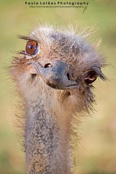 I'd never seen a pretty ostrich until this morning.