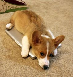 """I like how this MacBook keeps my belly warm."""