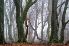 "Return to the Magical Woods - <a href=""http://larsvandegoor.com/"">WEBSITE</a>"