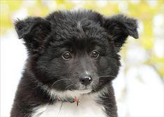 Little Sarah | Sarah, Border Collie / Poodle, 3 months | Piotr Organa | Flickr Border Collie, Dog Pictures, 3 Months, Poodle, Husky, Dog Cat, Cute Animals, Wall Art, Pets