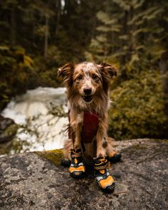 💦It's a tad rainy over on this side of Canada. I've got a lot of energy that I need to get out, thank goodness for these boots so I can run… Dog Harness, Dog Leash, Dogs And Kids, Dogs And Puppies, Biking With Dog, Valentines Day Dog, Up Dog, Dog Activities, Dog Travel
