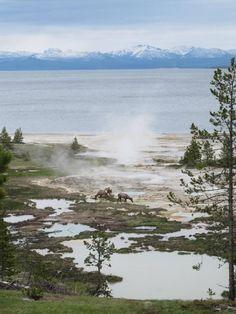 Yellowstone National Park photo nczAe.jpg