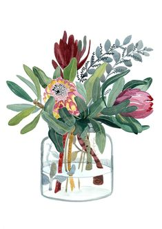 Watercolor Flowers Discover Protea Print Australia wall art King Protea watercolour print Mothers Day illustration Botanical gift for her native flower Protea Print Australia wall art King Protea watercolour Watercolor Print, Watercolor Flowers, Watercolor Paintings, Drawing Flowers, Painting Flowers, Tattoo Watercolor, Tattoo Flowers, Original Paintings, Art Floral
