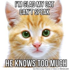 If Your Pets Could Talk: Adorable Animal Memes to Make You Smile ...