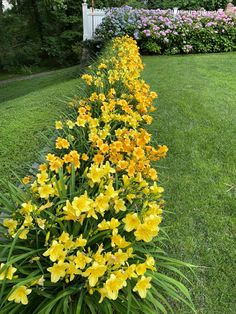 English Flower Garden, Lily, Flowers, Plants, Orchids, Plant, Royal Icing Flowers, Lilies, Flower