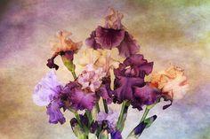 рисунок, ирисы, краски, цветы
