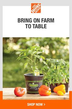 Shop top gardening brands at The Home Depot. Browse plants, plant care and more to bring your farm to table all season long. Plus, if Mom has a green thumb, find the perfect gardening gifts for Mother's Day in store or online. Tap to check out a wide variety of vegetable and herb gardening products at The Home Depot. Garden Solutions, Herb Gardening, Backyard, Patio, Garden Club, Garden Gifts, Plant Care, Mother Gifts, Low Carb Recipes