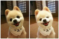 Cute... ^^