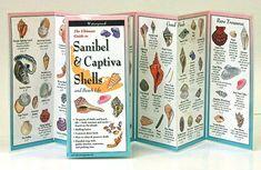 The Ultimate Guide to Sanibel and Captiva Shells and Beach Life Florida Vacation, Florida Beaches, Clearwater Florida, Sarasota Florida, Florida Usa, Vacation Spots, Seashell Identification, Captiva Island, Fort Myers Beach