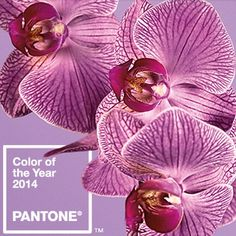 Pantone's 2014 Color of the Year: Radiant Orchid
