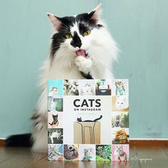 Kitty Photo @riepoyonn is helping us celebrate the release of our very first book. Nothing s...