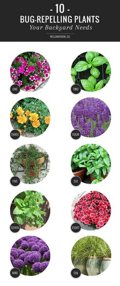Keep bugs out of the backyard with these insect-repelling plants. Goodbye mosquitos!!
