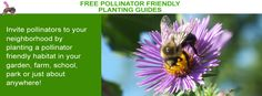Our ecoregional planting guides, Selecting Plants for Pollinators, are tailored to specific areas of the United States.