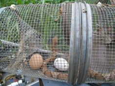 WE do Not have to deal with snakes up here as far as Critters getting at the chickens - but this is ingenious!    then he puts them in the freezer - to just go to sleep - the poisonous snakes -    http://www.backyardchickens.com/forum/uploads/48473_snaketrap2_003.jpg
