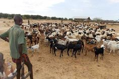 FULANI HERDSMEN ATTACKING NIGERIANS ARE FROM SENEGAL, MALI – NORTHERN GOVERNORS