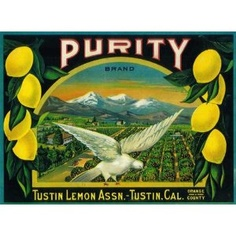 Tustin, Orange County Purity White Dove Lemon Citrus Fruit Crate Box Label Art Print