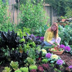 Your cool-season kitchen garden A guide to starting vegetables for fall and winter harvest Jim McCausland