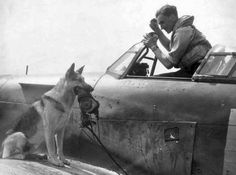 """Czech pilot of the fighter """"Hurricane"""" in the Royal Air Force of Great Britain and his dog. Battle of Britain. There are numerous cases where pilots take flight in their pets-dogs. Date: June 1941"""