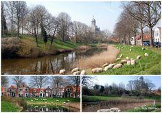 HOERA !!! Ze zijn er!!!!!!!!!!!! | Zeeland op foto - Middelburg