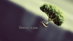 Gravity and Tree. HD wallpaper.[19201080] - See more on Classy Bro
