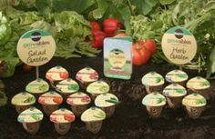Miracle-Gro Gro-ables Seed Pod Kit $13.30 Shipped