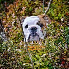 (1) Baggy Bulldogs - Baggy Bulldogs's Photos