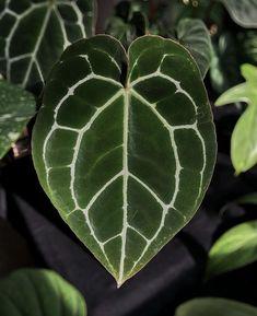 Conservatory Plants, Plant Wallpaper, Houseplants, Tattoo, Future, Lifestyle, Pretty, Flowers, Green