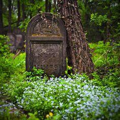 I love walks through old cemeteries.