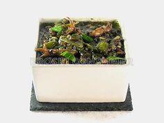 Receta de arroz negro con puntillas de calamar | EROSKI CONSUMER