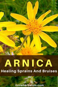 Discover Awesome Healing Properties Of Arnica  There are about 30 species of Arnica ( other common names: Leopard's bane, mountain tobacco). And all of them are perennials that spread by rhizomes. With its cheerful golden flowers, arnica has long been used for sprains and bruises as well as homeopathic treatments.