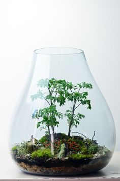 Forest Terrarium // live moss // lichen branches // large teardrop vase on Etsy, $400.00